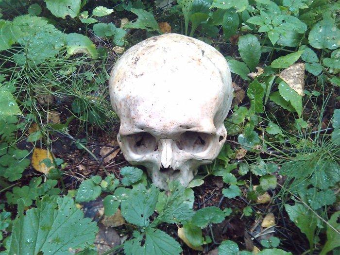 Влесу около новоиспеченной столицы отыскали человеческие останки