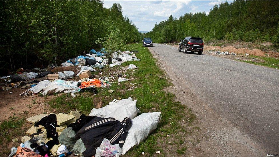 ВМосковской области создадут карту лесных экотроп