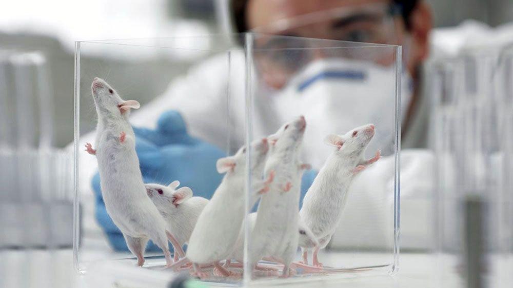Ученые побороли бесплодие умышей