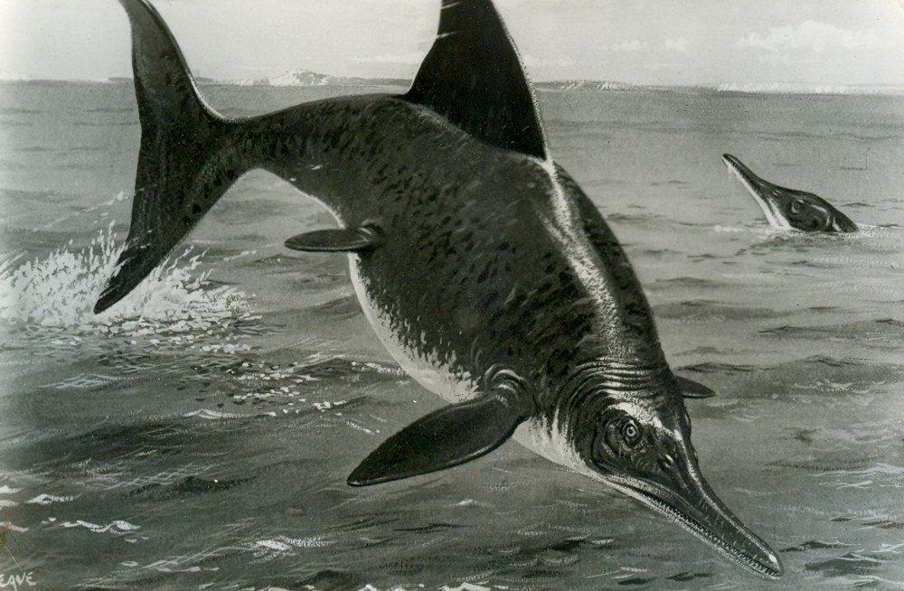Самый крупный из отысканных ихтиозавр был взрослой беременной самкой— Ученые
