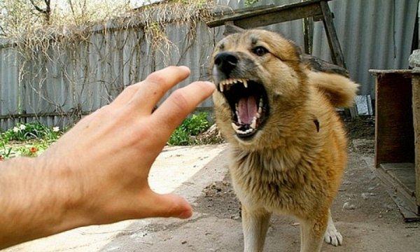 укусила собака остался синяк