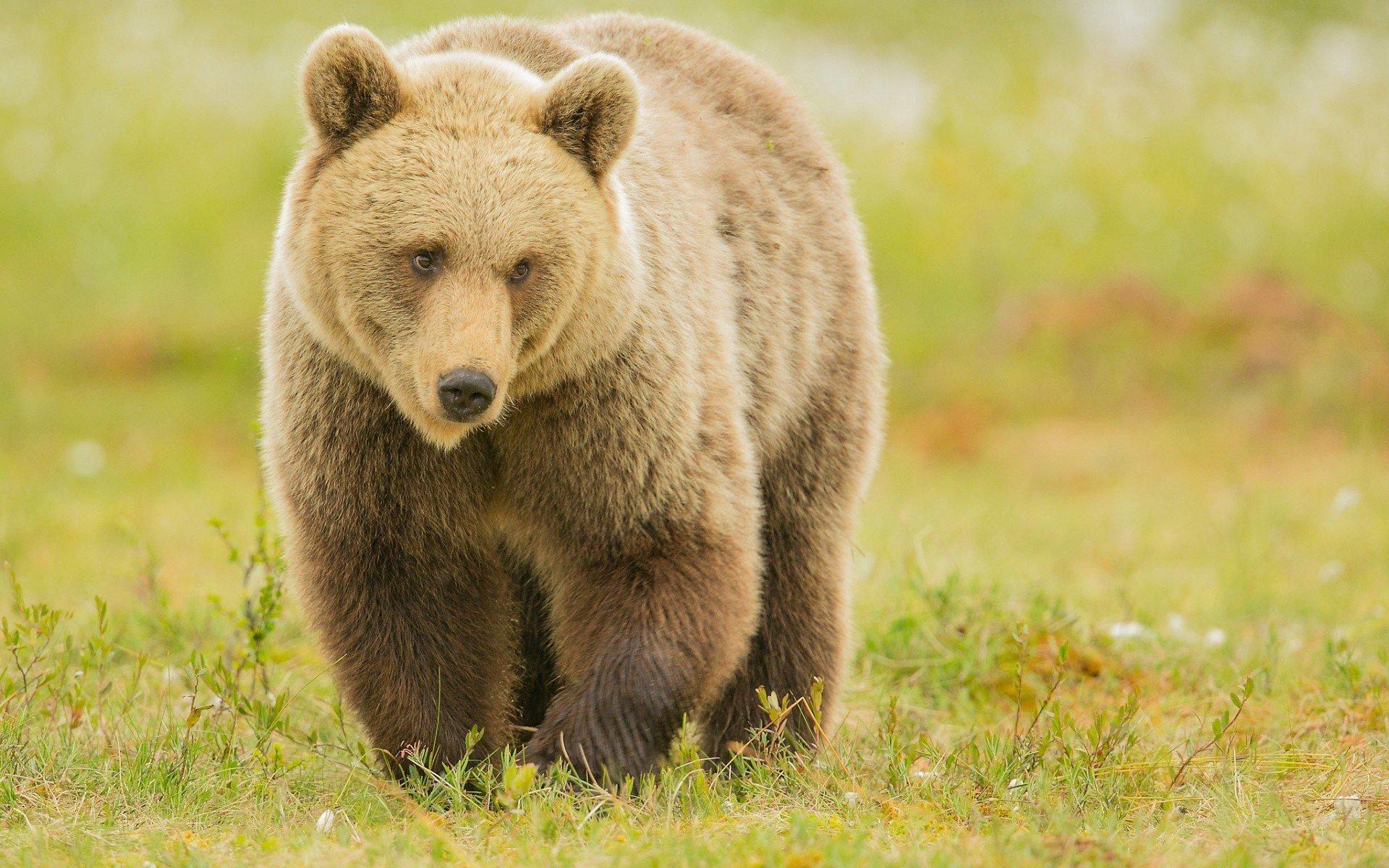 Наобочине дороги Сургут— Салехард найден труп, изъеденный животными