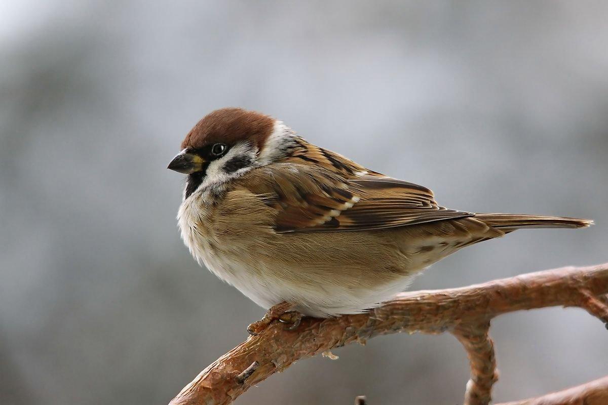 Размеры птиц иживотных зависят отсреды обитания— Ученые