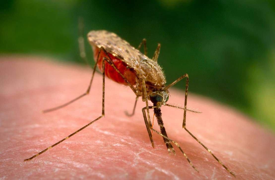 Вюго-восточной Азии распространяется «супер-малярия»