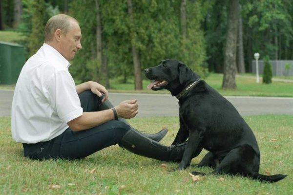 Максим Галкин показал, как выгуливает собаку Владимира Путина