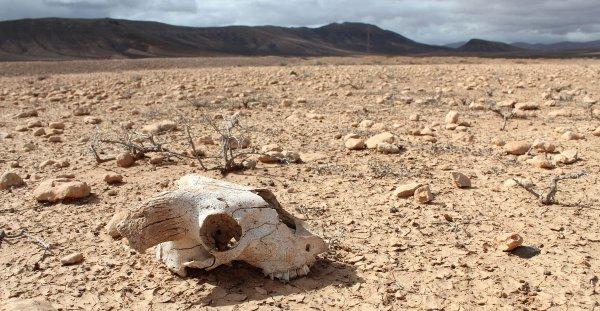 Ученые: Вымирание вида зависит от размера животных