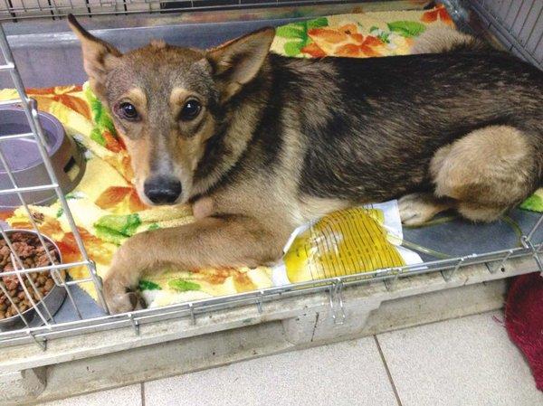 Актрису Илону Броневицкую обвинили в гибели бездомных собак от чумки