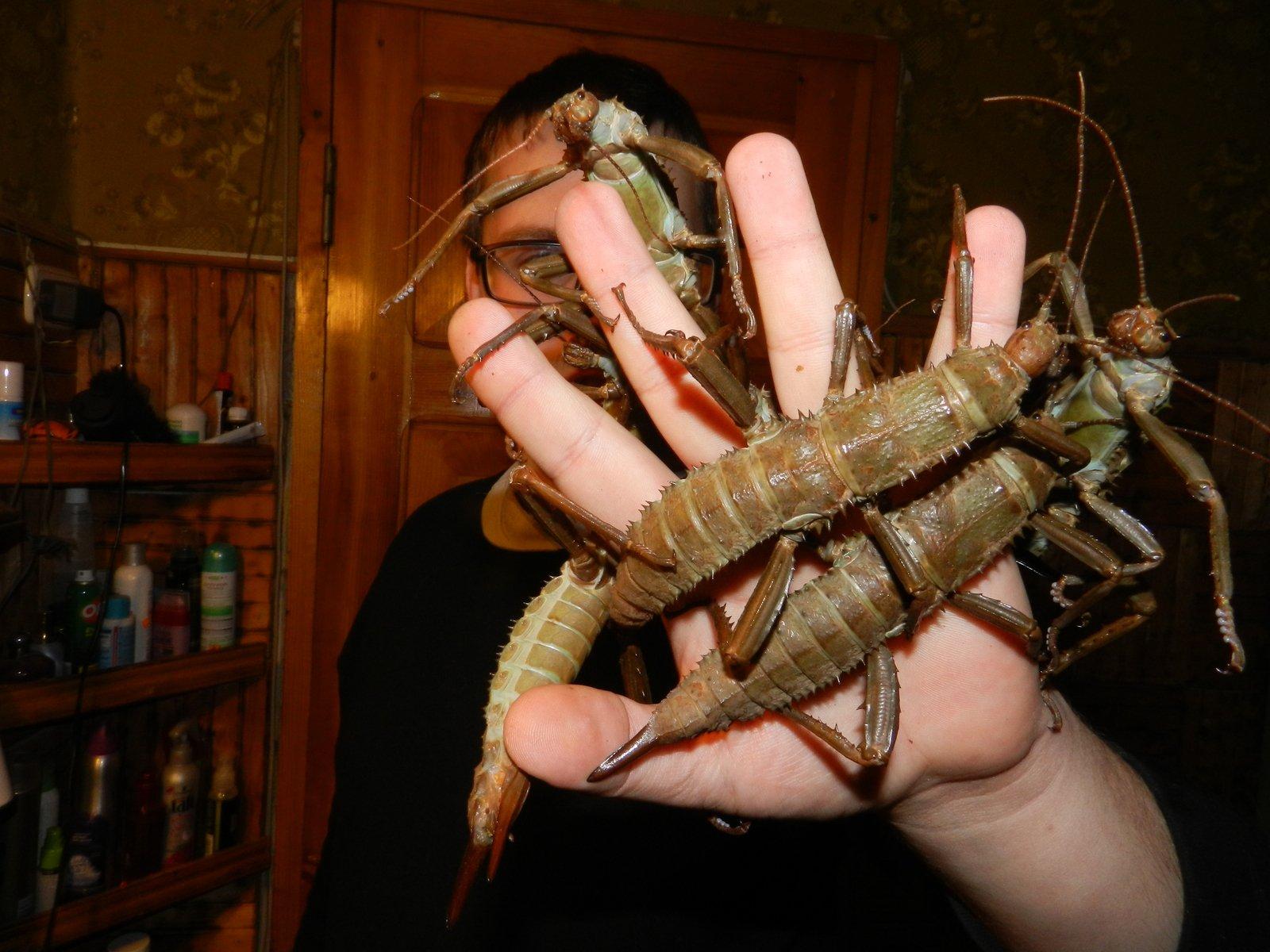 Ученые отыскали неповторимых насекомых, столетие считавшихся вымершими