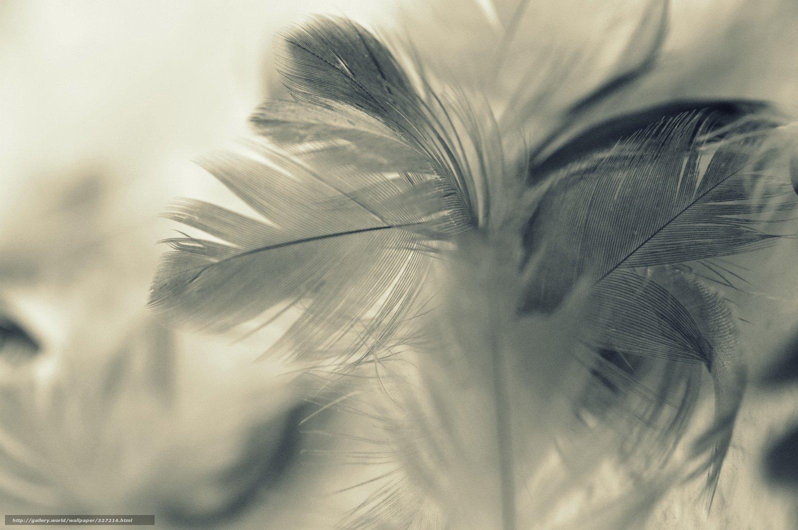 Ученые изШвеции посоветовали питаться птичьими перьями