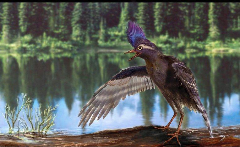Птицы сумели подняться ввоздух 120 млн лет назад