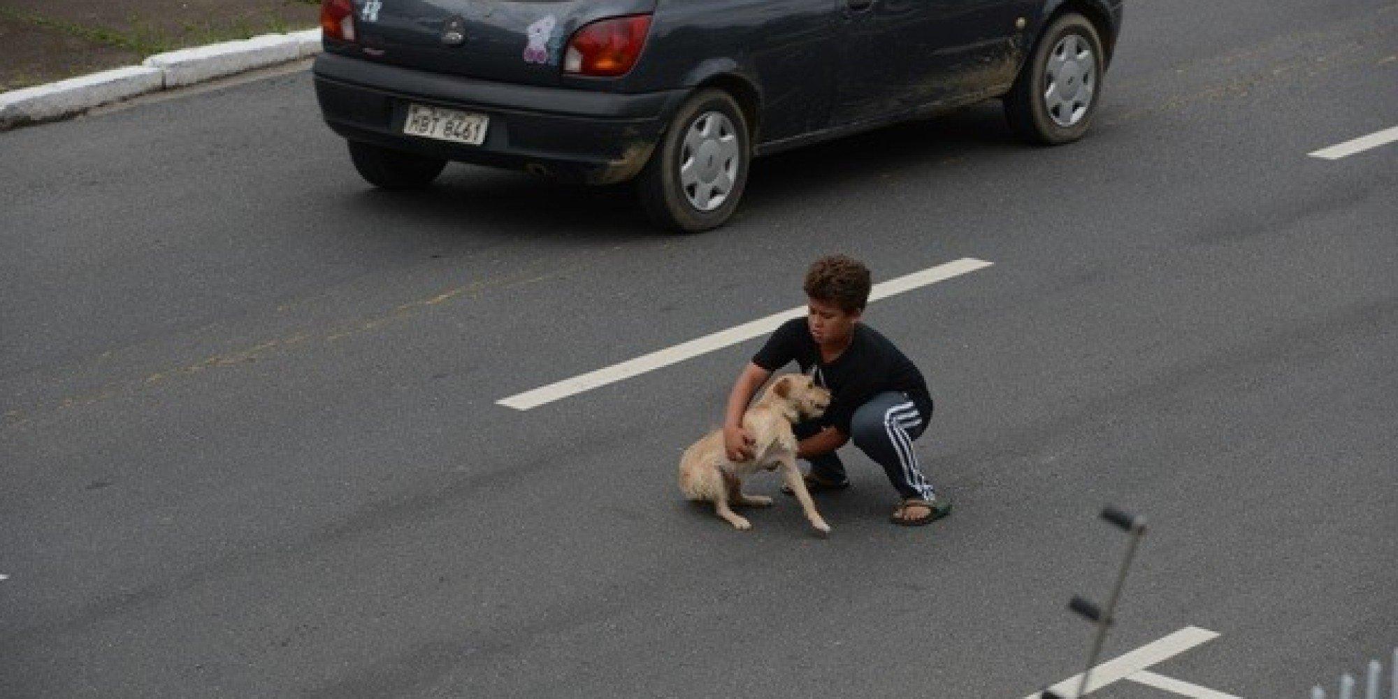 Девушка преднамеренно переехала намашине пса наглазах у владельца воВладивостоке