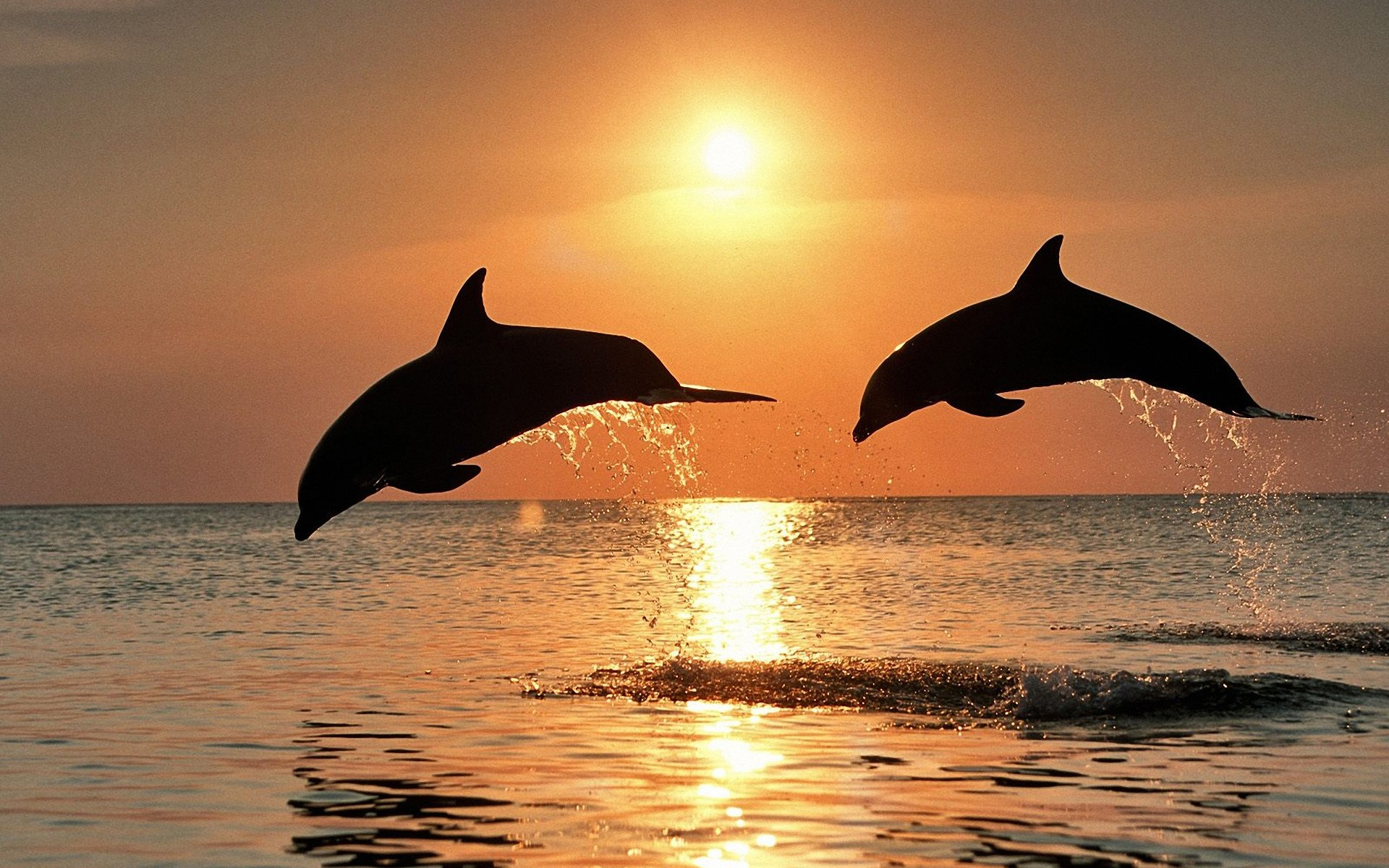 Ученые сообщили что самки дельфинов научились защищаться от нежелательной беременности