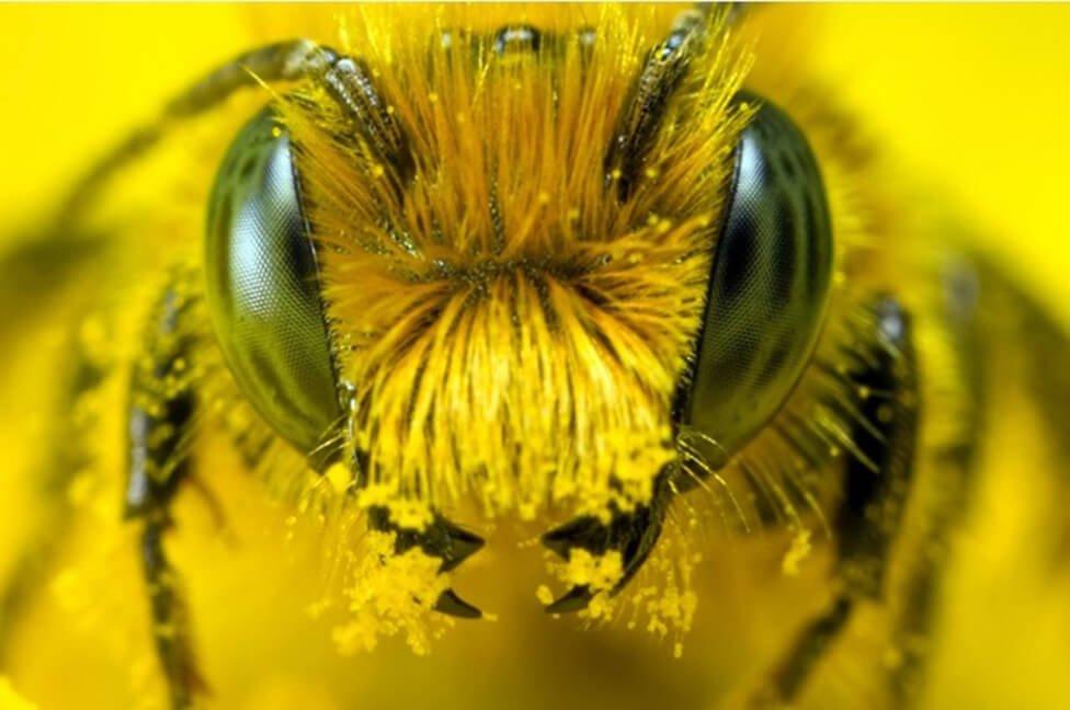 Экологи бьют тревогу: ВГермании загадочно пропали практически все насекомые