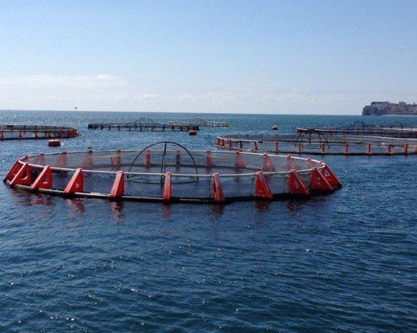 «Рыбная долина»— первое крупное предприятие аквакультуры, создаваемое вКамчатском крае