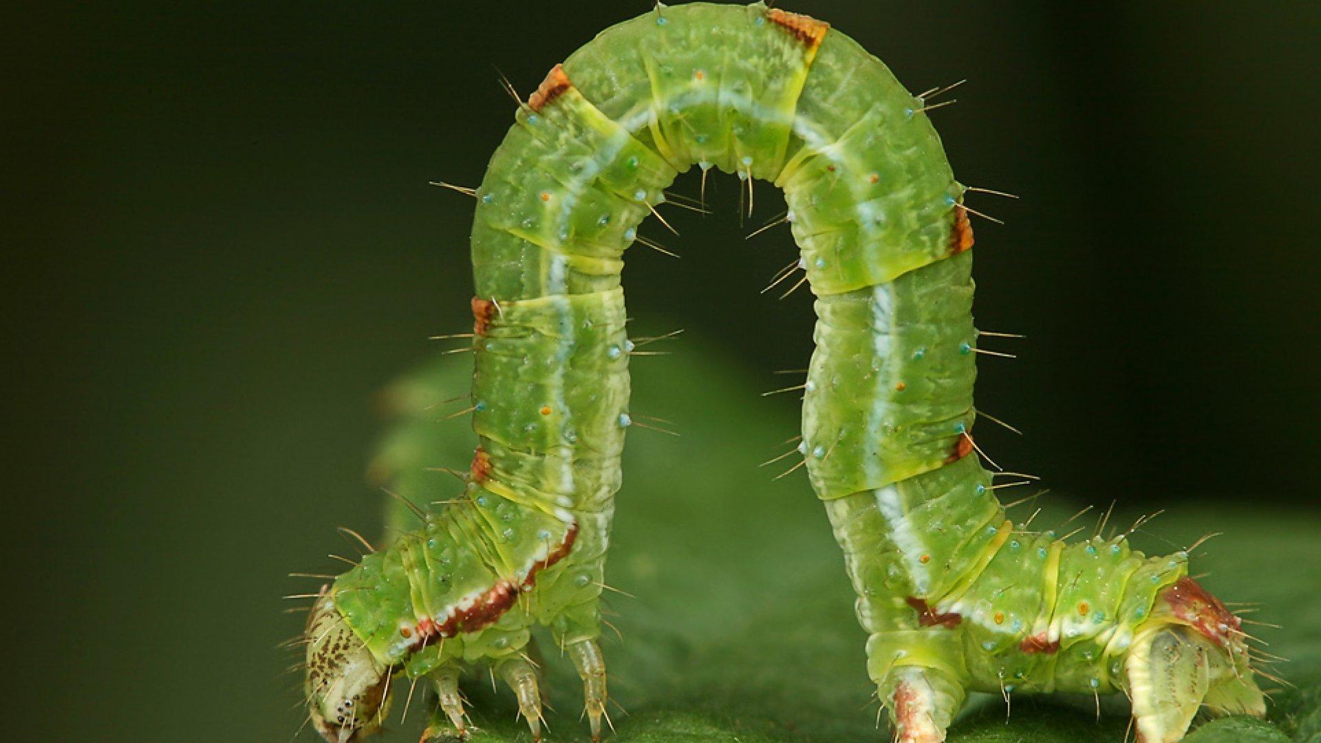 Численность насекомых вФРГ сократилась за27 лет на75-82% — Экологи