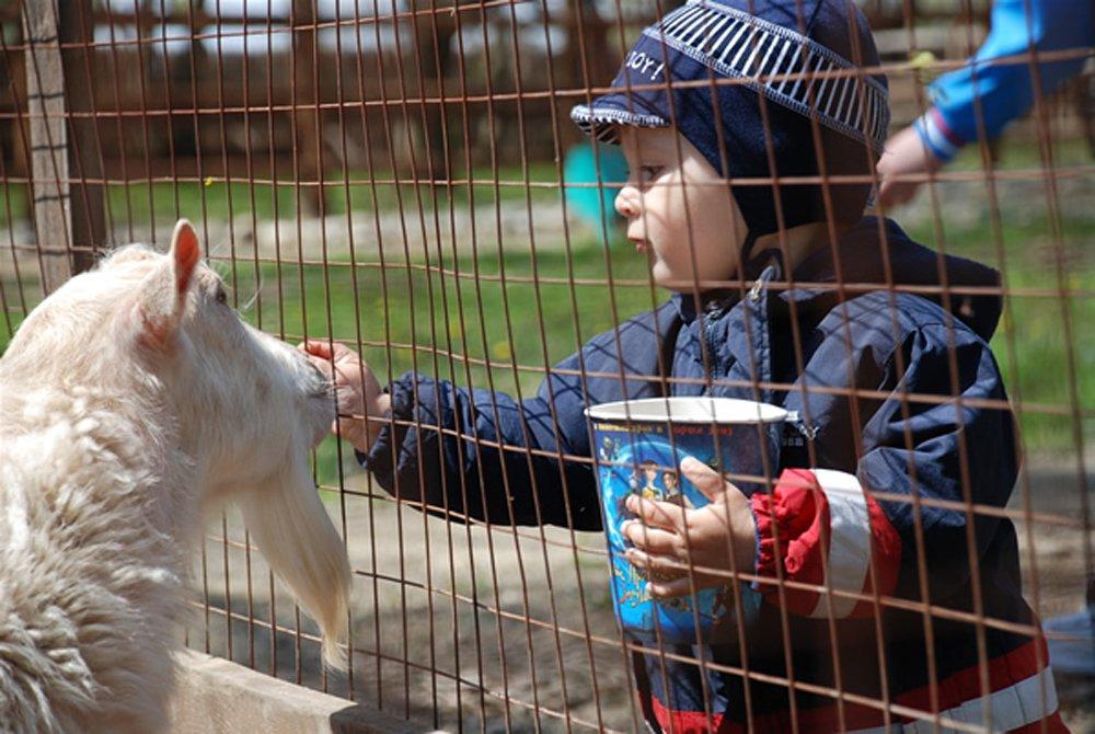 Московские власти одобрили реконструкцию Детского зоопарка