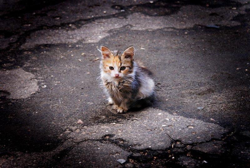 Брошенные котята картинки