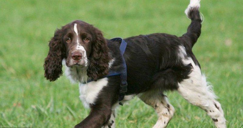 ВЕкатеринбурге ищут хозяев собаки, найденной вцентре сперерезанным горлом