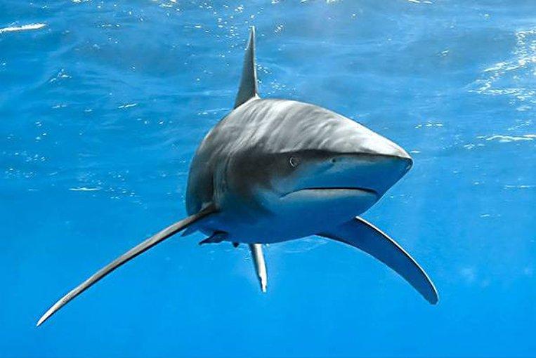 Ученые узнали, кто съел мозг акул, отысканных уамериканских берегов