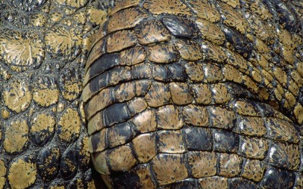 В аэропорту Стамбула таможенники изъяли партию крокодиловой и змеиной кожи