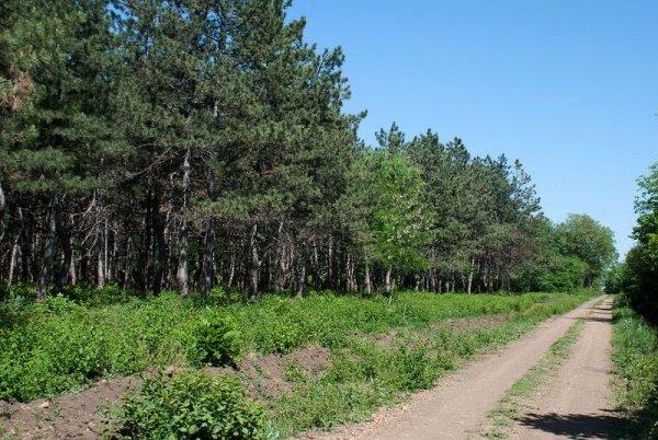 Останки двухлетнего ребенка обнаружили в лесу Ростовской области