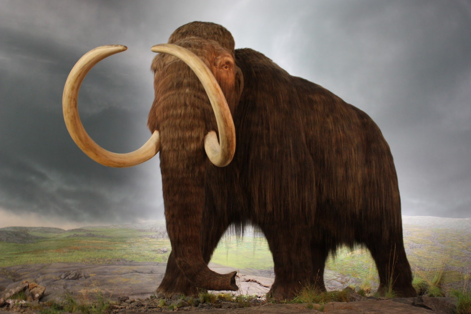 Самцы мамонтов были большими «социофобами»— Ученые