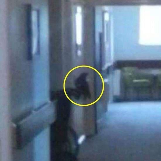 Женщина сфотографировала смерть ФОТО