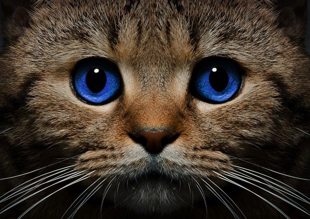 Бездомный кот в Японии подозревается в покушении на убийство
