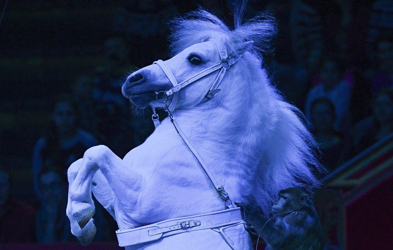 Сириец изнасиловал пони в Берлине