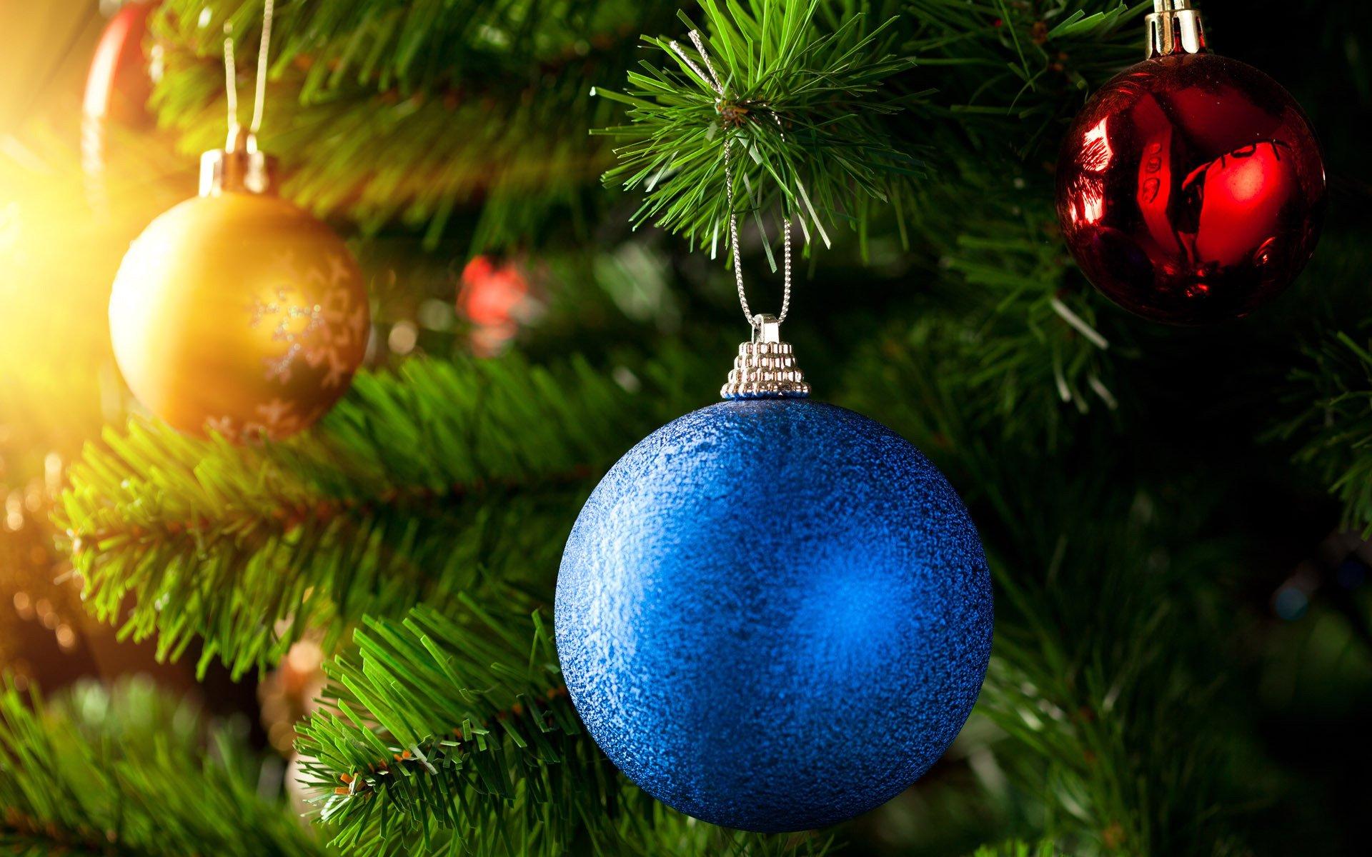 В Петербурге установили первую официальную новогоднюю ель
