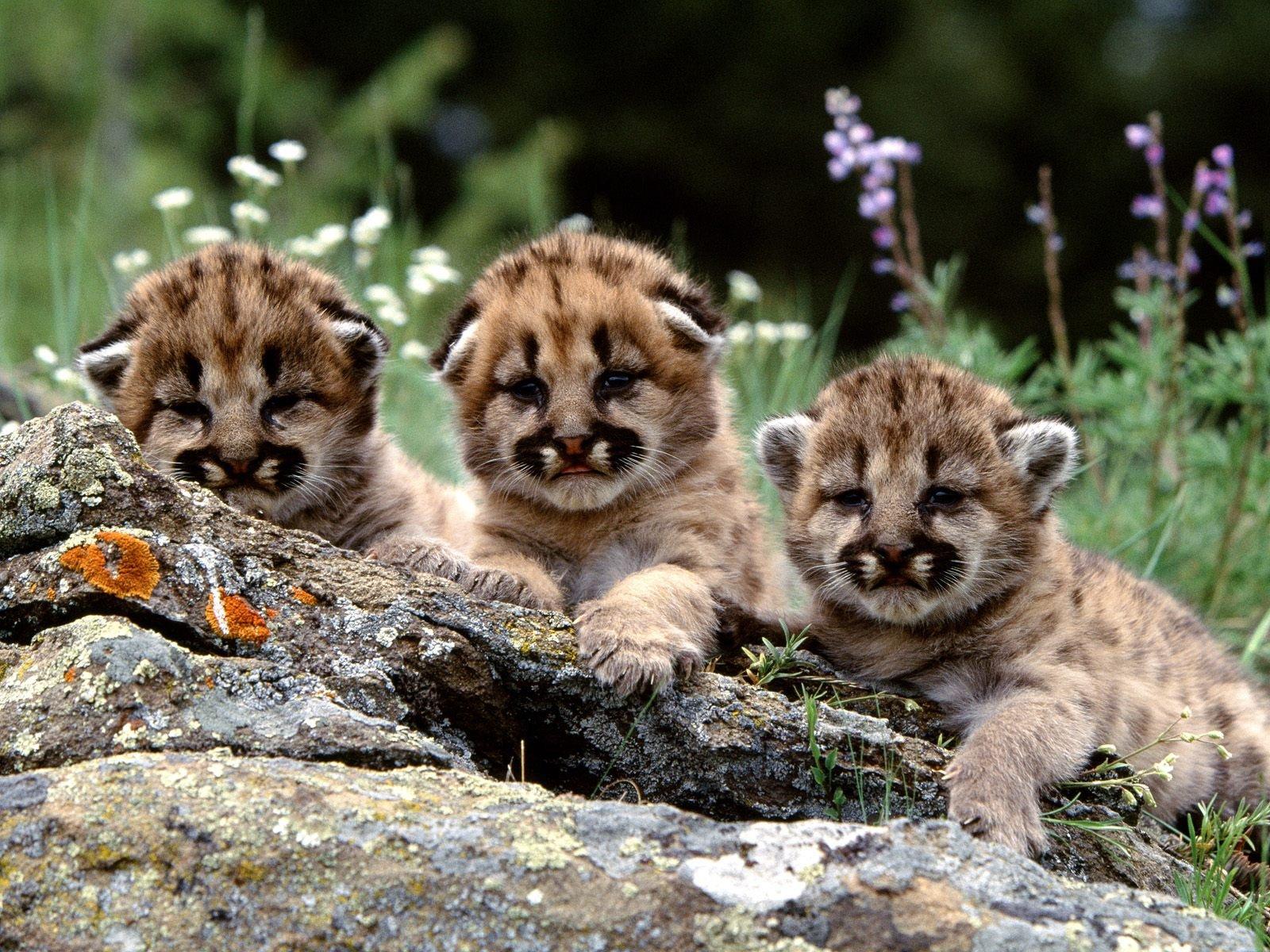В 2017 году в Московском зоопарке на свет появились около 600 детенышей