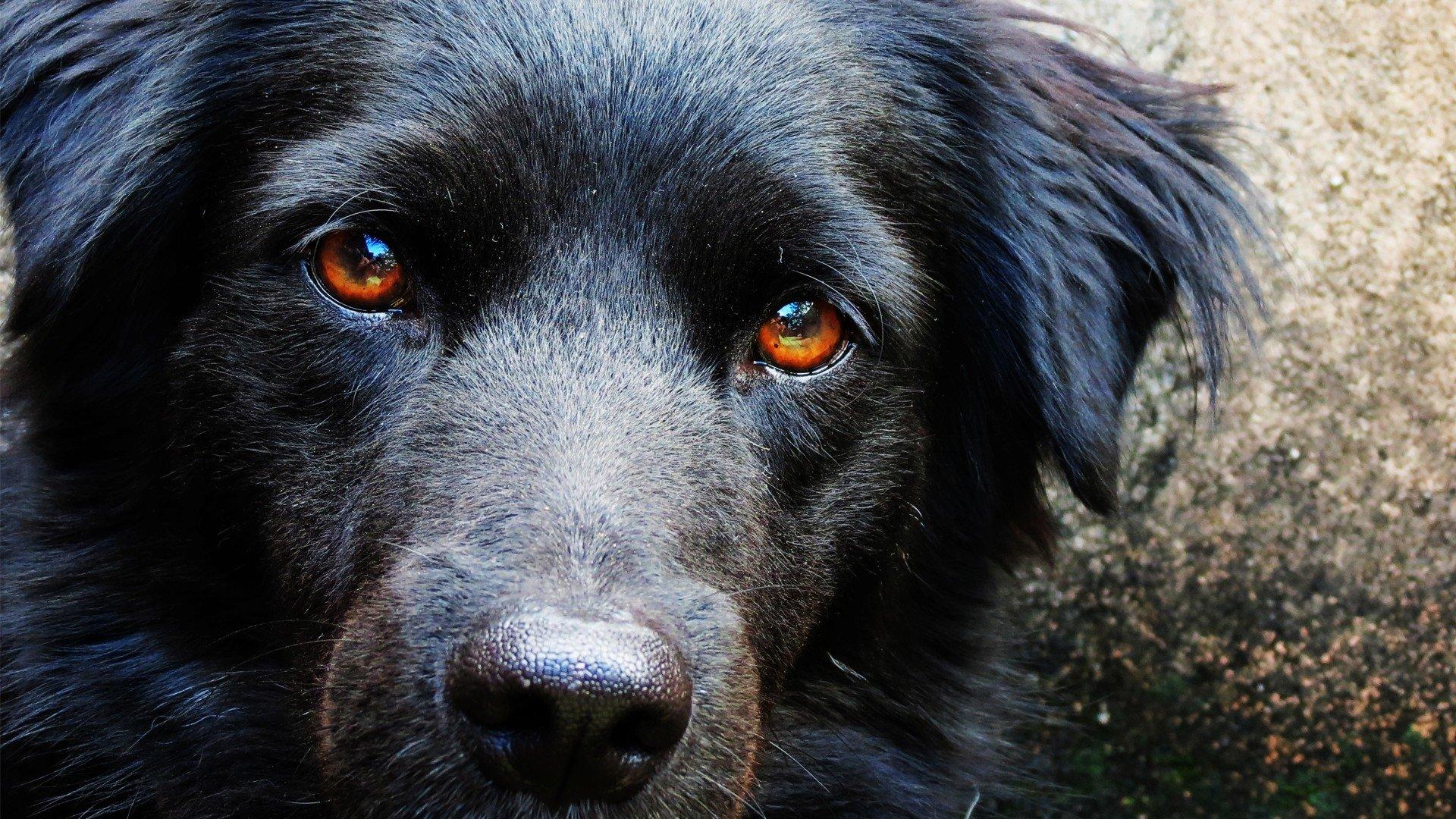 В Приморье две девушки спасли из болота тонувшего пса