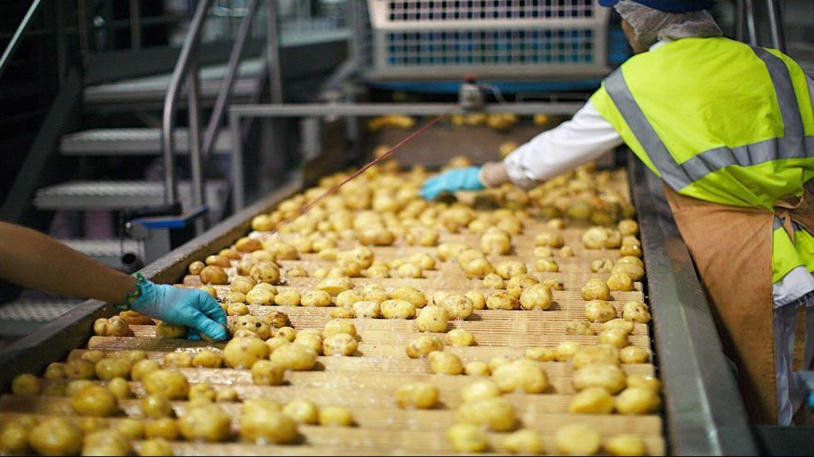 В Тульской области сгорел завод по упаковке картофеля