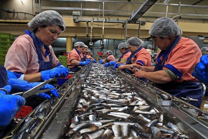 Российские рыбаки готовятся побить рекорд по отлову за прошлый год