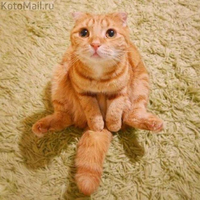 Тройное сальто выполнил кот-акробат, спускаясь с лестницы