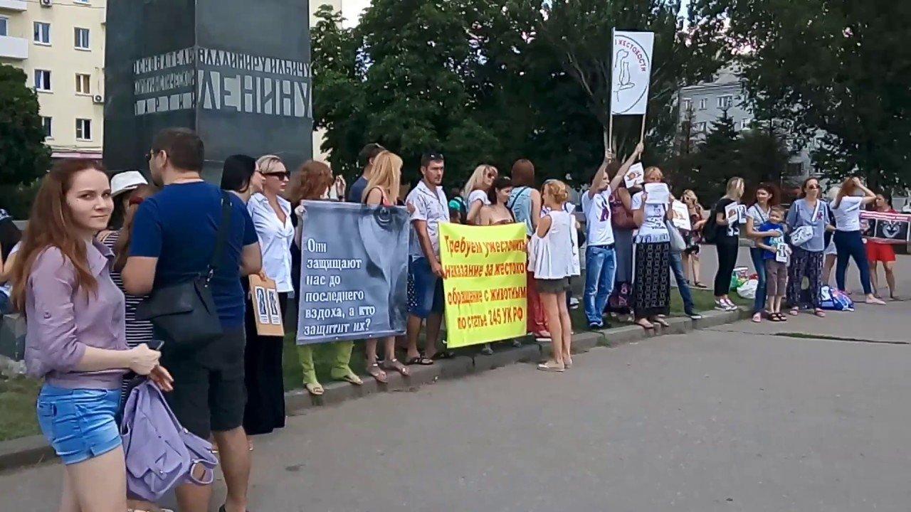 Зоозащитники из Ростова собираются на приём к Путину