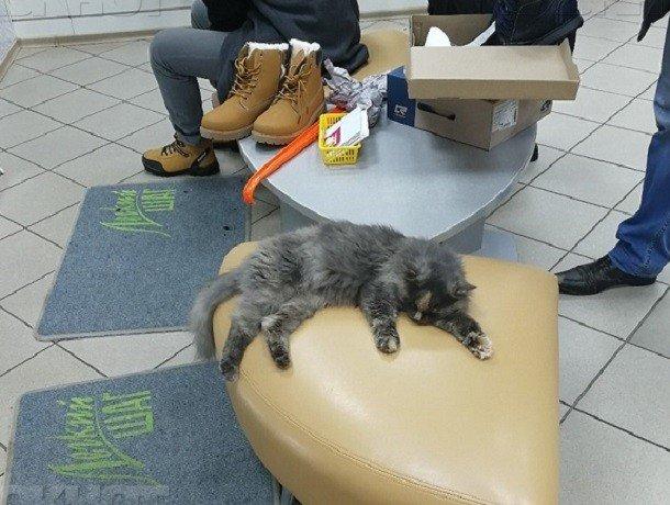В Воронеже в  магазине обуви продавцом стал кот