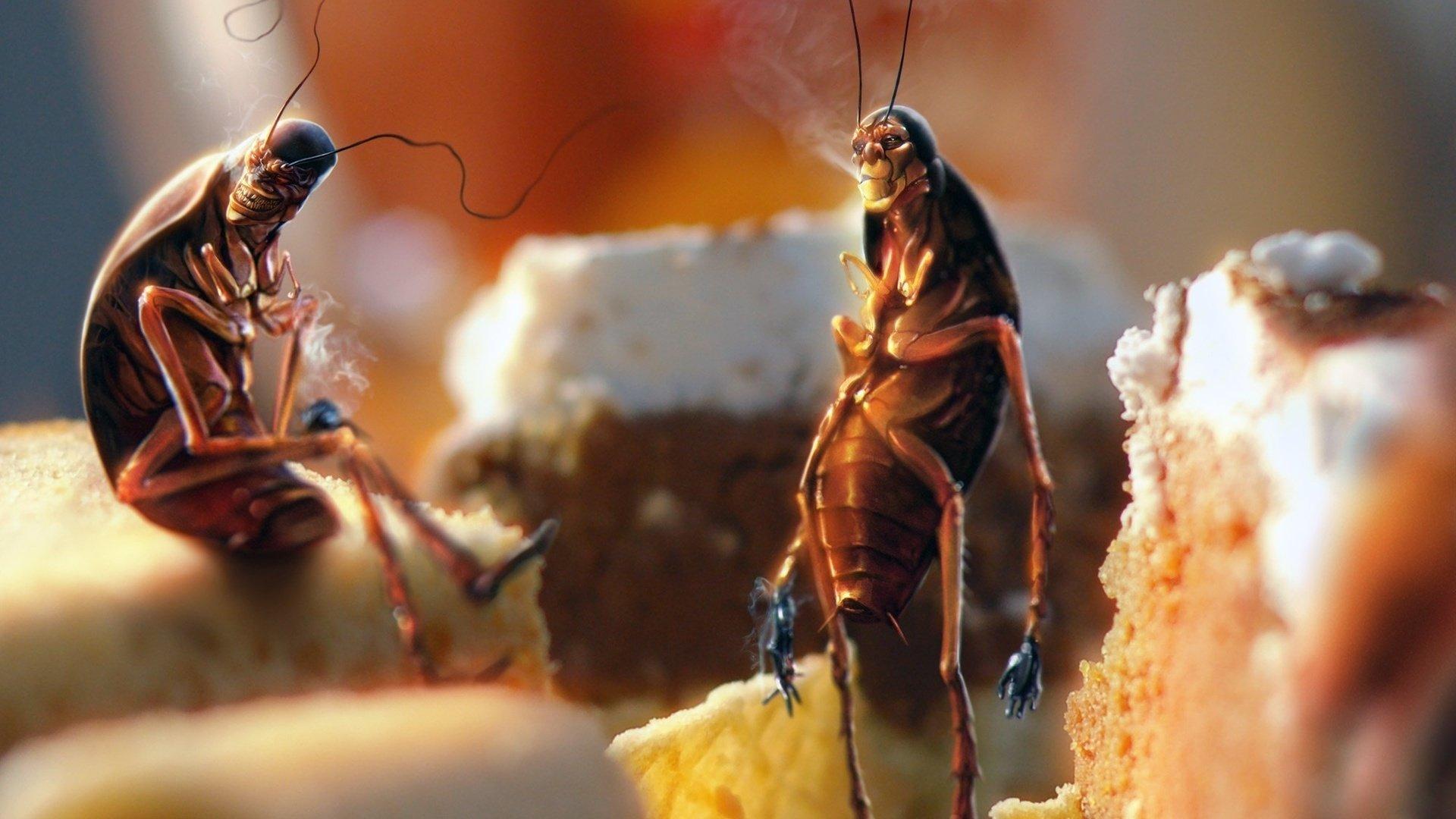 Стало известно о начале продаж хлеба из насекомых в Финляндии