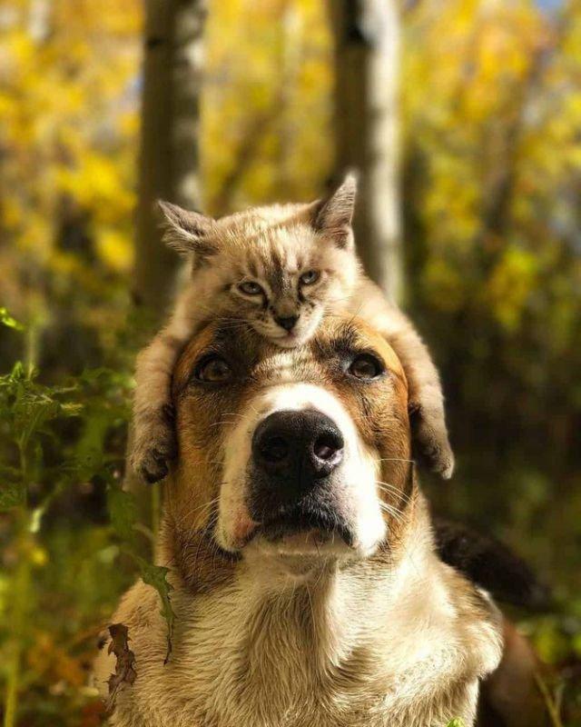 Путешественники кот и собака покорили интернет