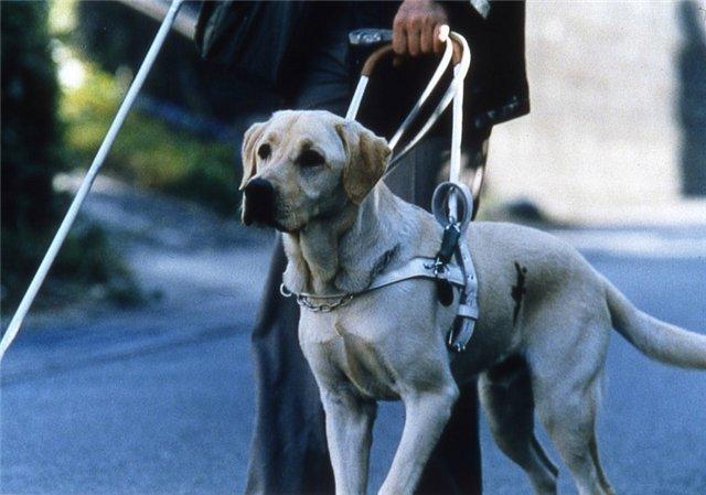 Людей сограниченными возможностями вУльяновске непустили вавтобус из-за собак-поводырей