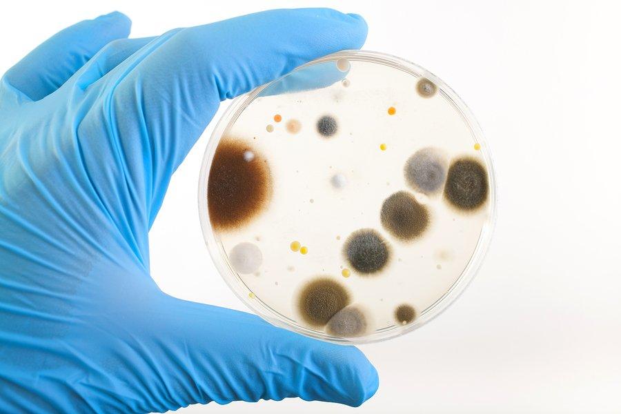 Ученые насчитали наМКС 12 тыс.  видов бактерий