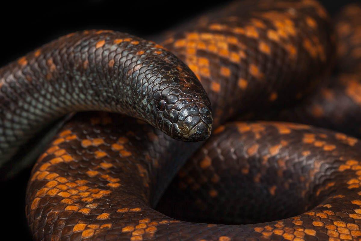 прекрасны картинки толстых змей праздник