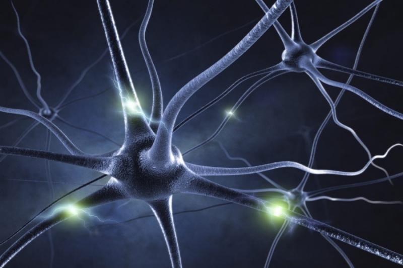Германские  учёные отправят наМКС нервные клетки человека