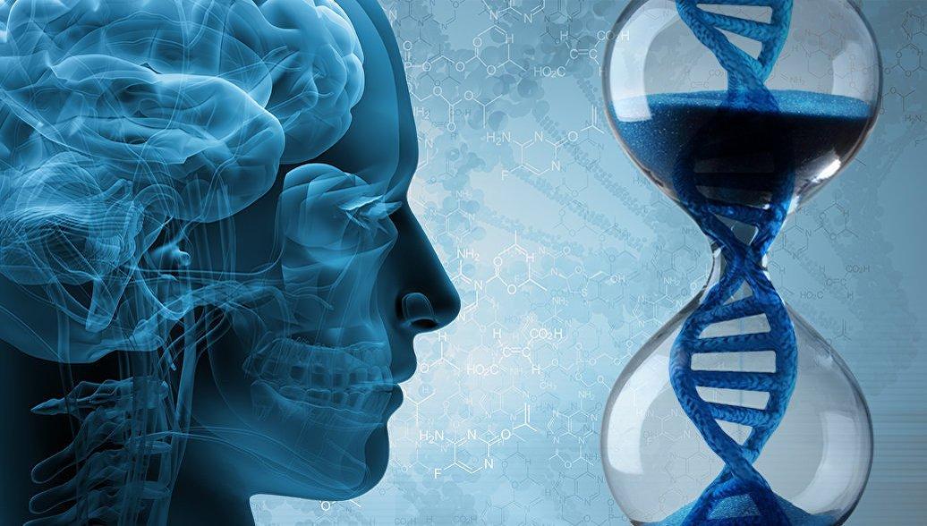 Ученые назвали главную причину старения мозга