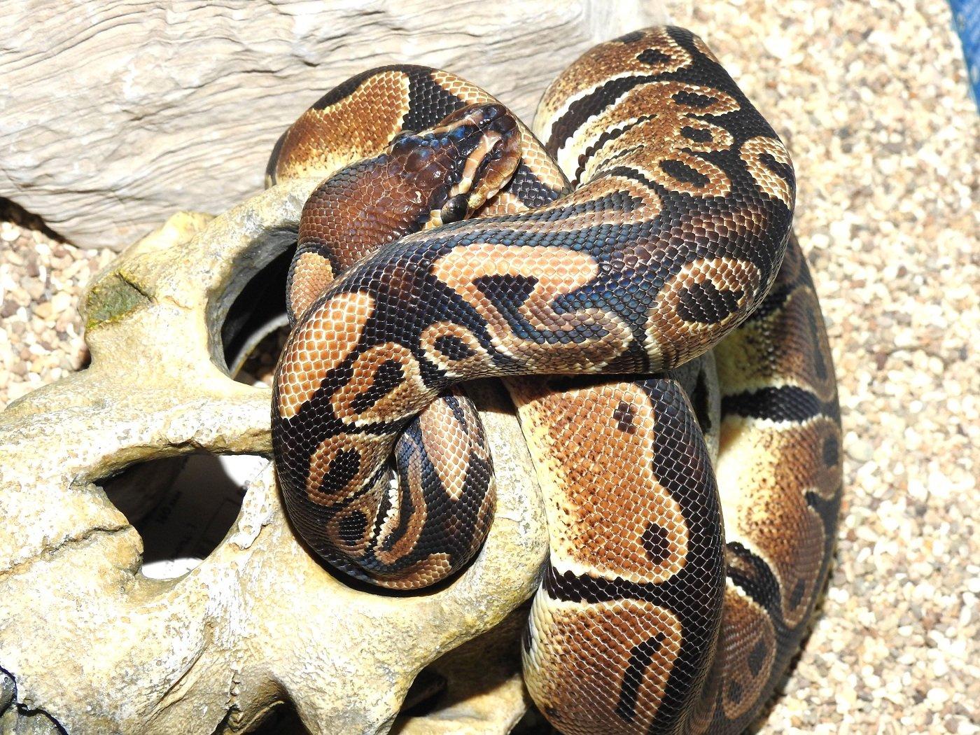 Гламурная украинка втуфлях нашпильках словила двухметровую змею
