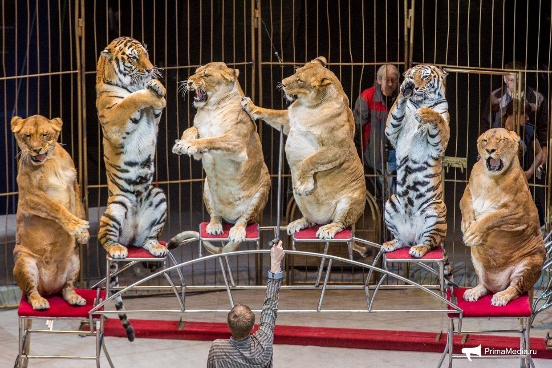 Владивостокский цирк