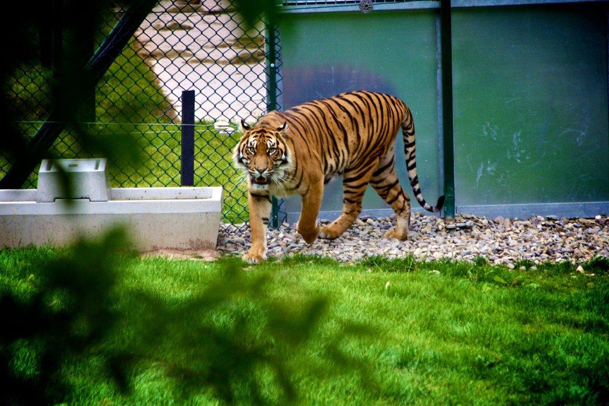 ВДании зоопарки просят приносить домашних питомцев накорм хищникам