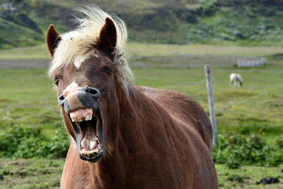 ВЯрославле хозяйка пони заплатит занападение питомца наженщину