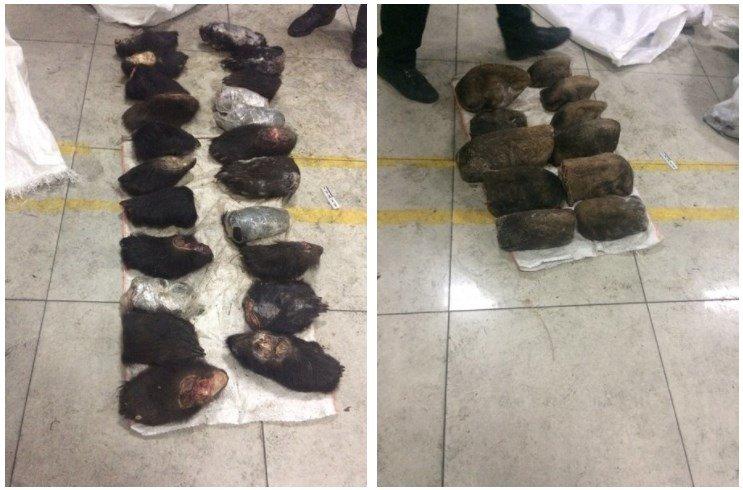 ВЗабайкалье задержали контрабандиста завывоз в КНР практически 500 лап медведей