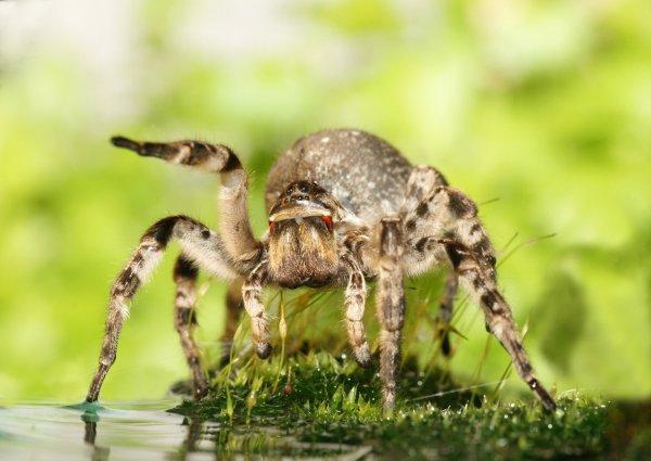 В Ростовской области замечены тарантулы